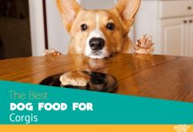 The five highest rated pet foods for Corgis