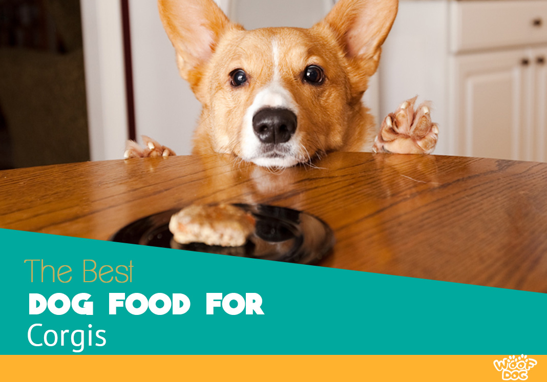 Best Dog Food For Corgis Reviews And Top Picks For 2018