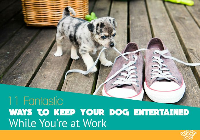 Ways to Keep Your Dog Entertained While You Are at Work
