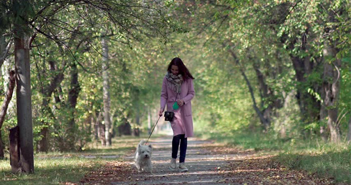Woman Walking With Puppy In The Park