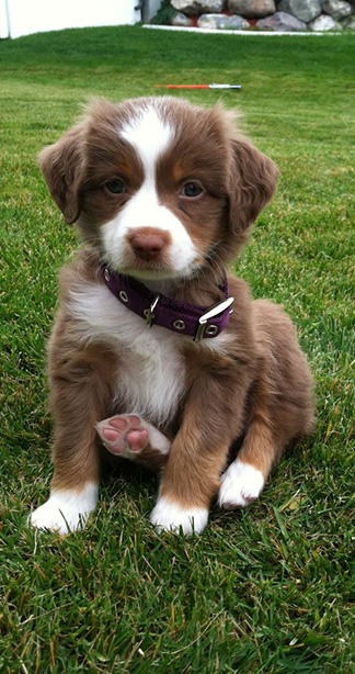 adorable puppy on the grass