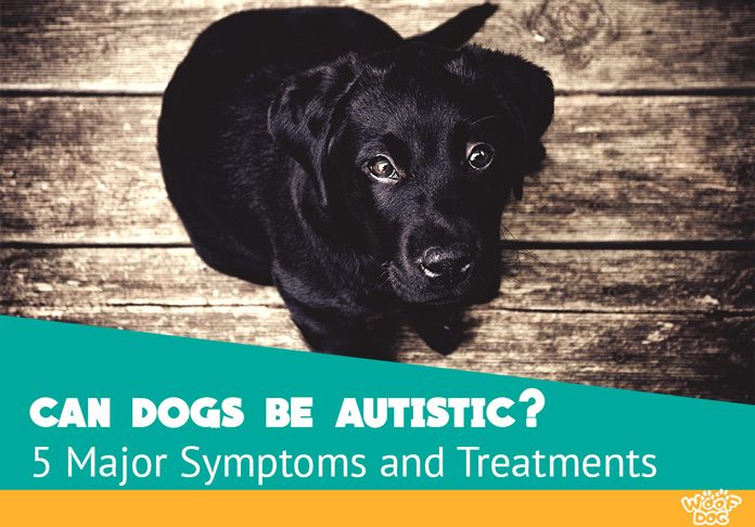Autism in dogs - Symptoms and Treatments