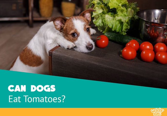 Are Tomatoes OK for dogs? Our vet team answers