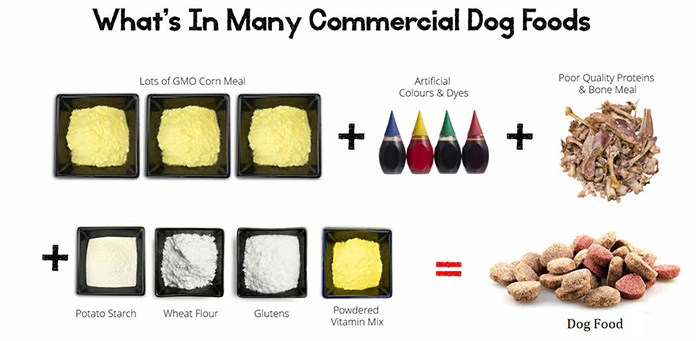 dog food ingredients to avoid