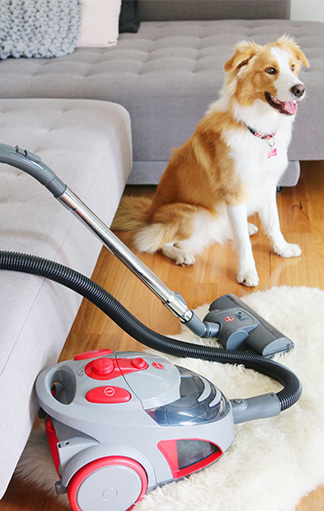 dog sitting on the floor near Vacuum