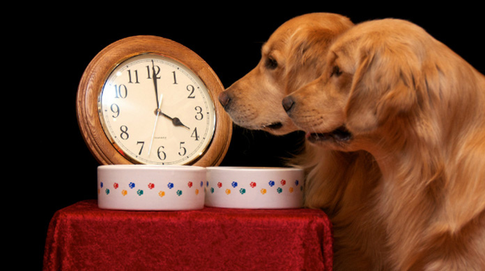 two dogs looking in clock and waiting for eating