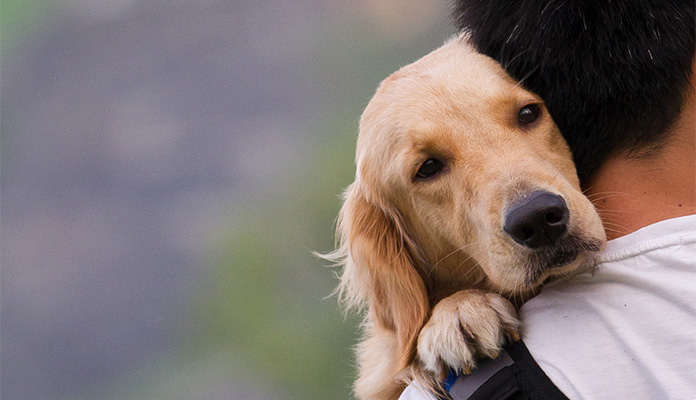 golden retriever hugging a man