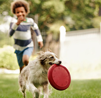 kid playing with dog and red frisby toy