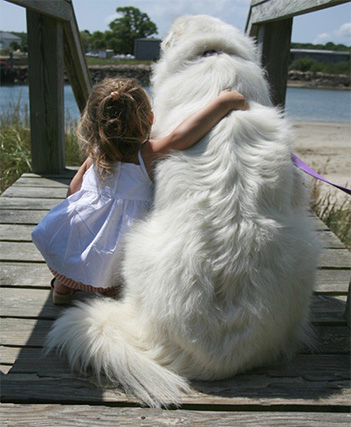 little girl with her lovely Great Pyrenees