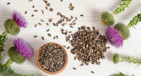 milk thistle plants and seeds