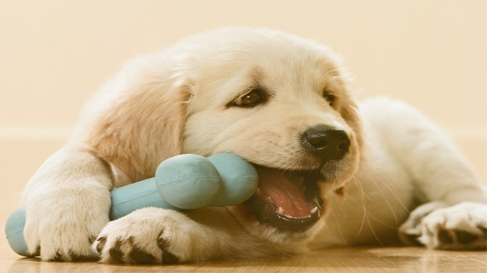 puppy with chewing scented bone toy