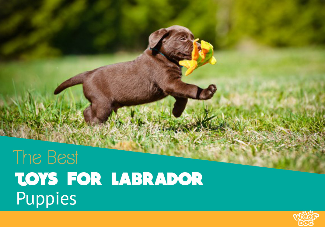 Best Dog Beds For Labrador Puppies