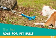 Our best rated indestructible toys your Pit Bull will love