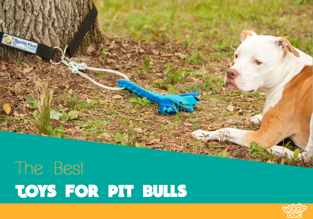 Indestructible And Chew Toys For Pit Bulls