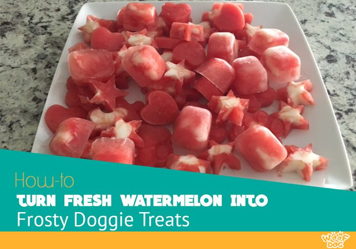 watermelon frosty doggie treats