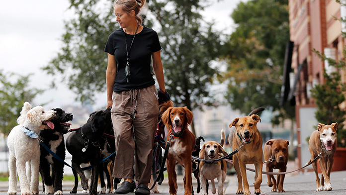 women dog walker with dogs
