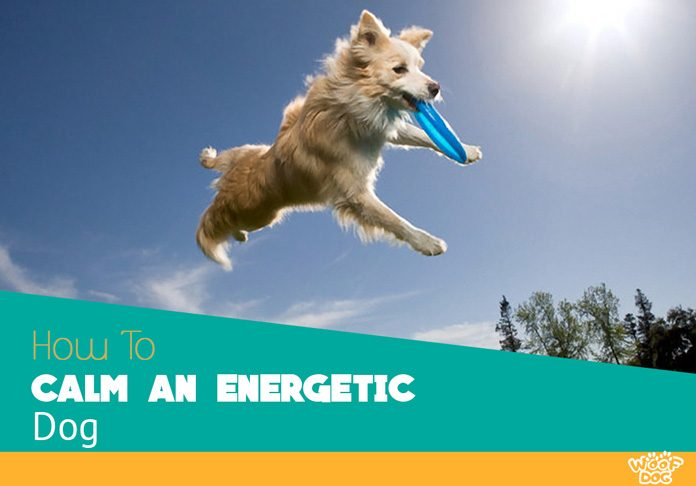 How to calm an energetic dog