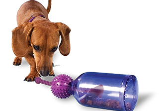 image of dog with PetSafe Busy Buddy Tug-A-Jug