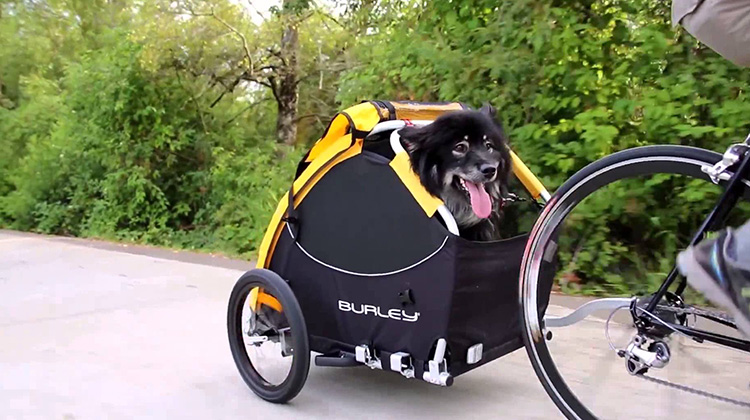 dog riding behind a bicycle in a carriage