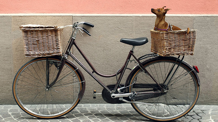 Image of dog in bike basket