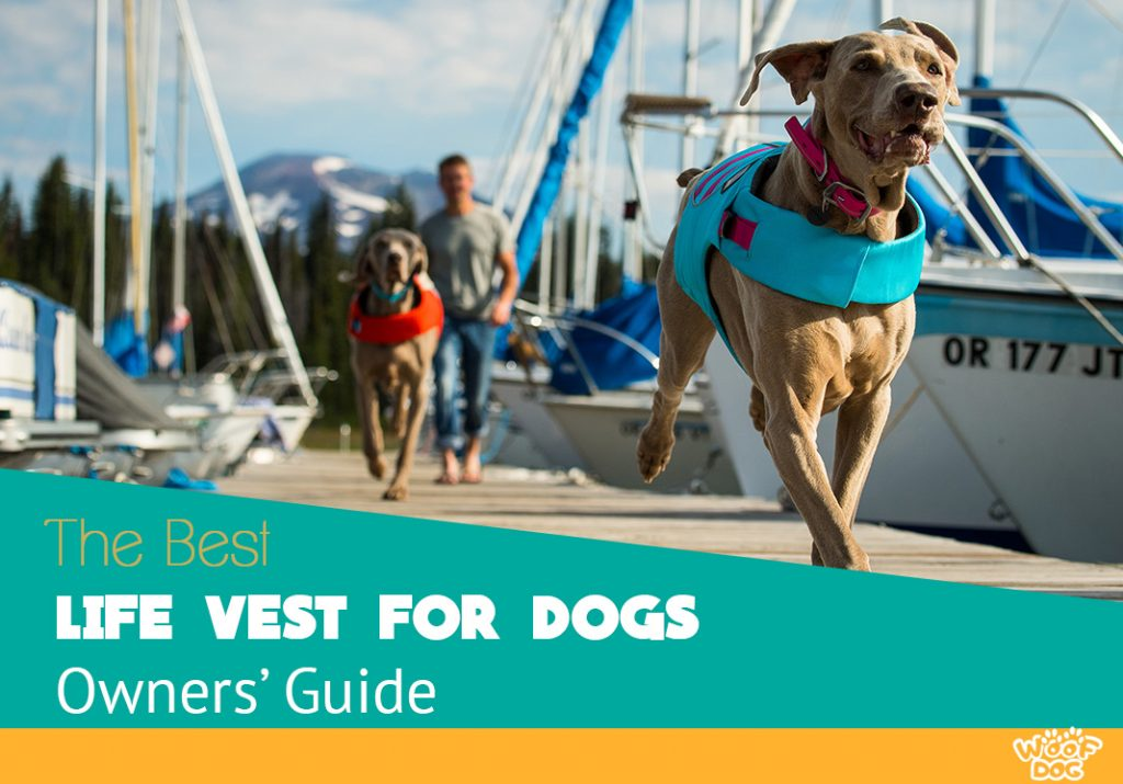 Finding the ultimate Dog flotation Vests and Jackets