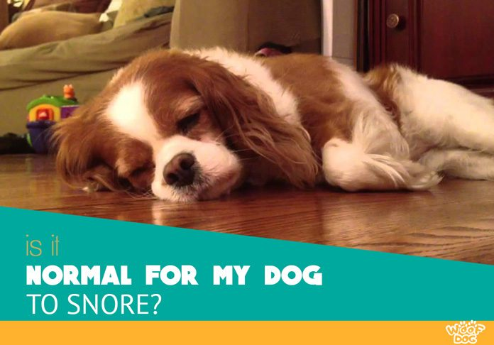 is it normal for dog to snore