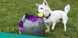 PetSafe Review