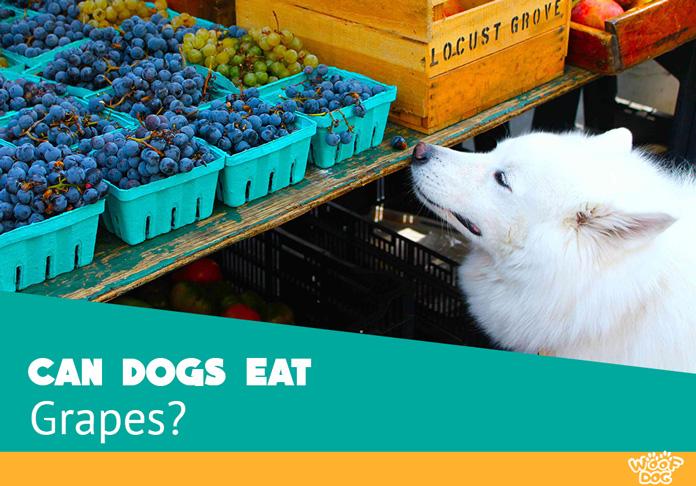 Can My Dog Eats Grapes