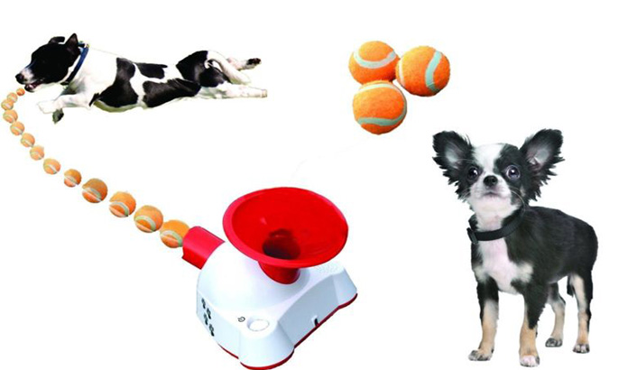 dog and machine with balls