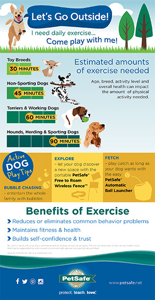 PetSafe infographic Dog exercise
