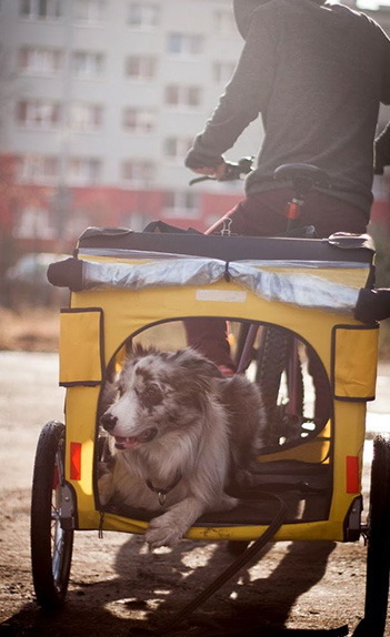 man and dog in yellow bike carriage