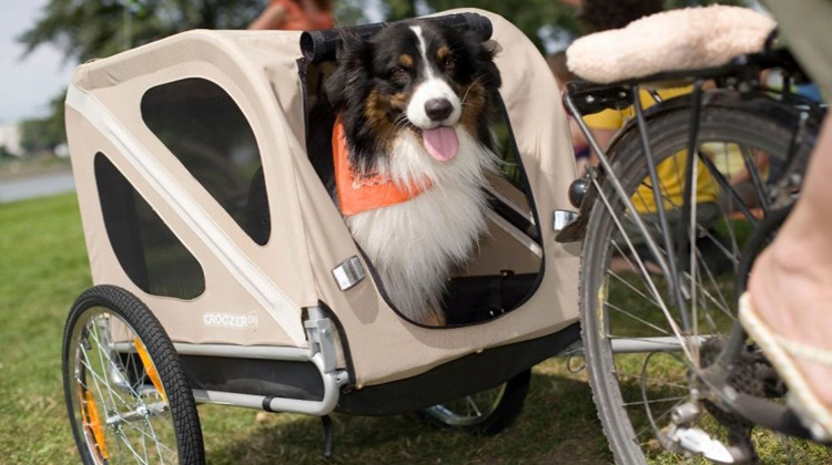 pup in beige carriage for bicycle