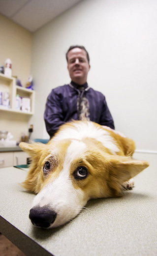 Vet and sick dog