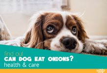 can dog eat onions