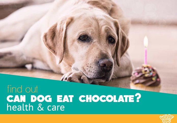 Can Dogs Eat Chocolate Toxic Or Tasty Treat