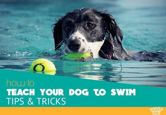 Tips For Teaching Your Dog How To Swim