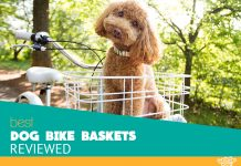 Image for Best Dog Bicycle Baskets Reviews