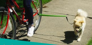 best dog bicycle leash review