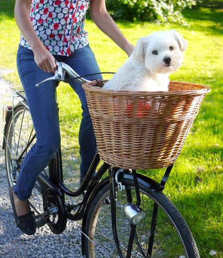 dog riding in bike basket