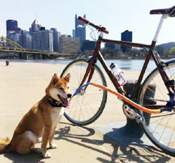pup and bike on hot day
