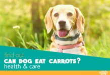 can dog eat carrots