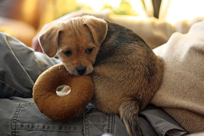 puppy with donut toy