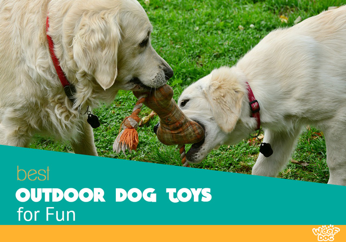Top 7 Best Dog Outdoor Toys For Your Pet