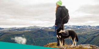 Dog on hiking with woman