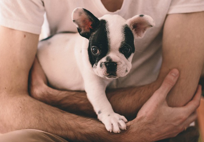 French Bulldog Puppy in men's arms