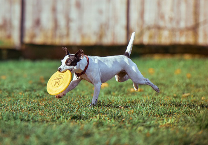 pup playing with a disc