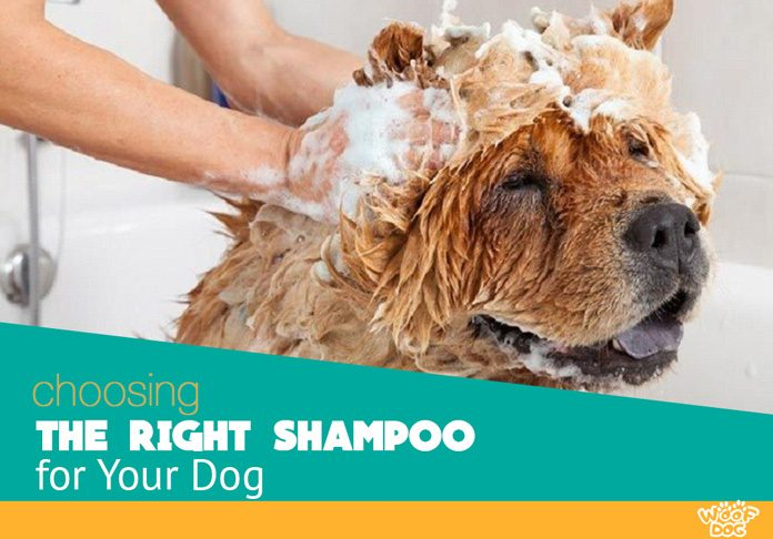 best shampoo for your dog