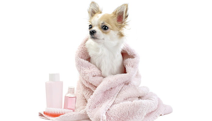dog in a bath towel
