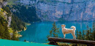 dog with beautiful lake view
