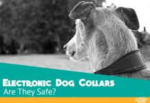 Electronic Dog Collars